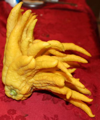 Buddha's Hand or fingered citron - side view