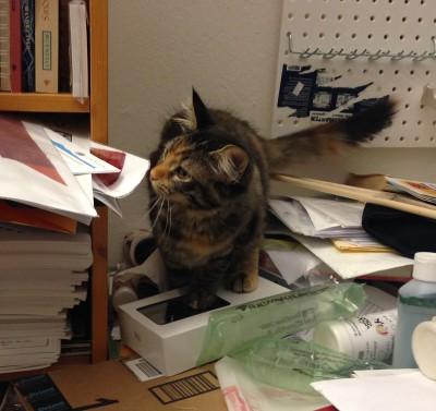 Tigress investigating woven samples