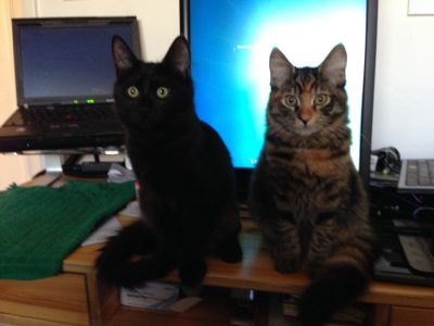 Fritz and Tigress in front of monitor