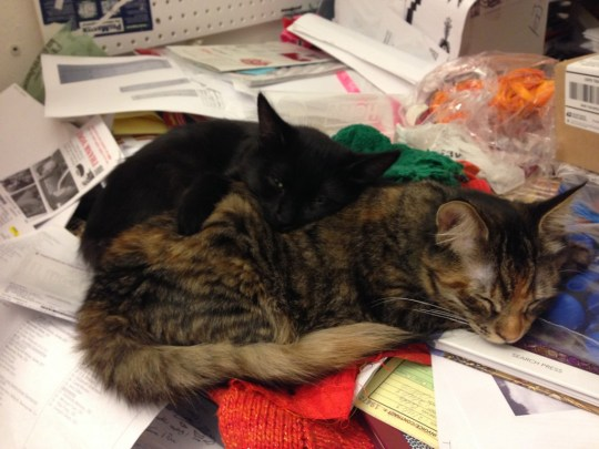 Fritz and Tigress, cuddled up and sleeping on my worktable