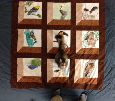 quilt top, with cat