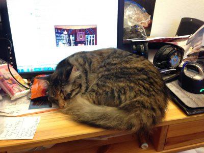 Tigress napping