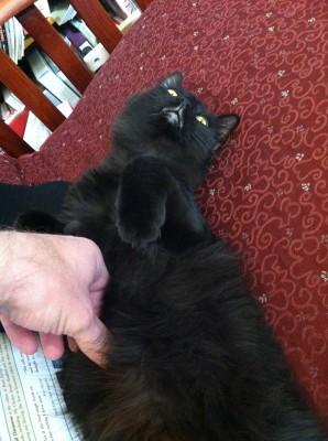 Fritz getting a belly rub