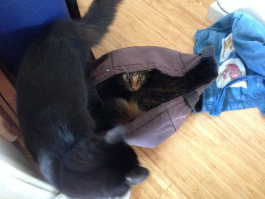 Cat in a bag!