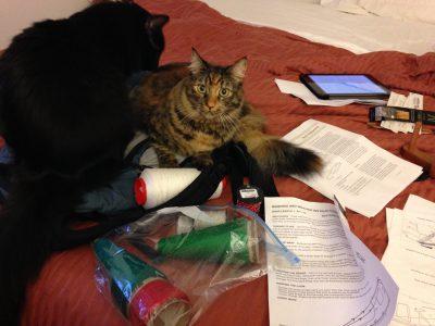 Fritz and Tigress helping me warp