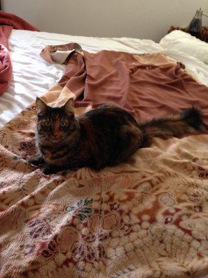 Cat on kimono