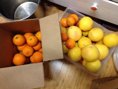 Seville oranges, pink grapefruit, and blood oranges