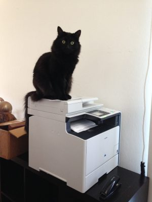 Fritz perched on the printer