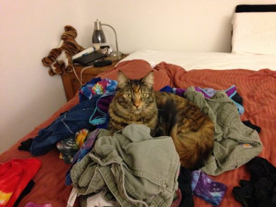 Tigress guarding my clean laundry
