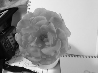 desaturated photo of rose