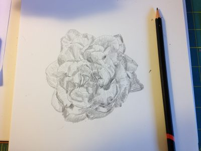 sketch of rose