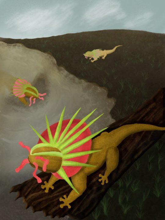 Final version of the sonic salamanders