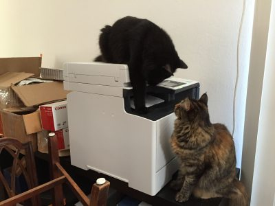 Tigress and Fritz, harassing the printer