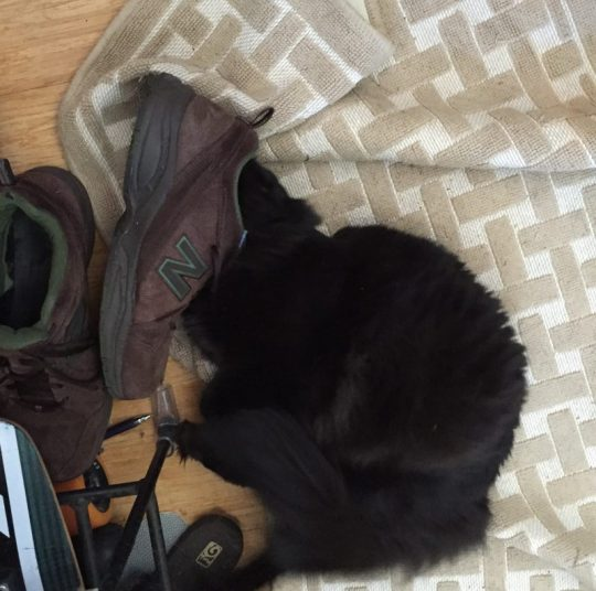 Fritz sniffing a shoe