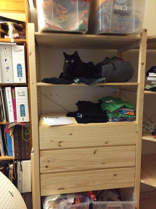 Fritz enjoying the new shelves