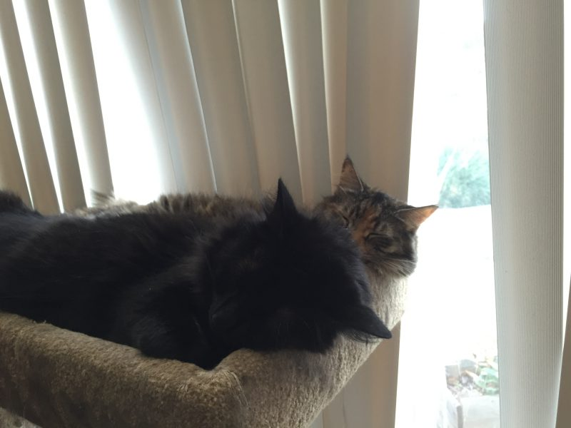 Fritz and Tigress, napping together