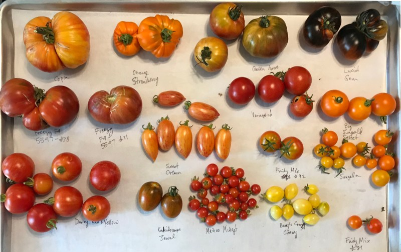 tomato tasting tray
