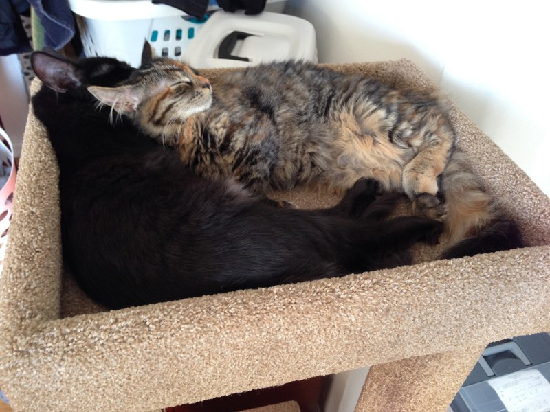 New Olympic sport: synchronized napping!