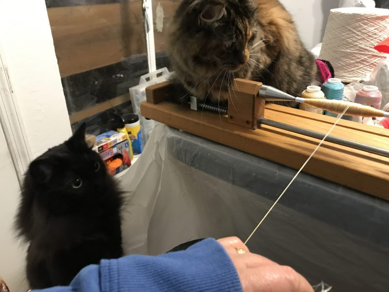 trying to wind yarn with two cats supervising