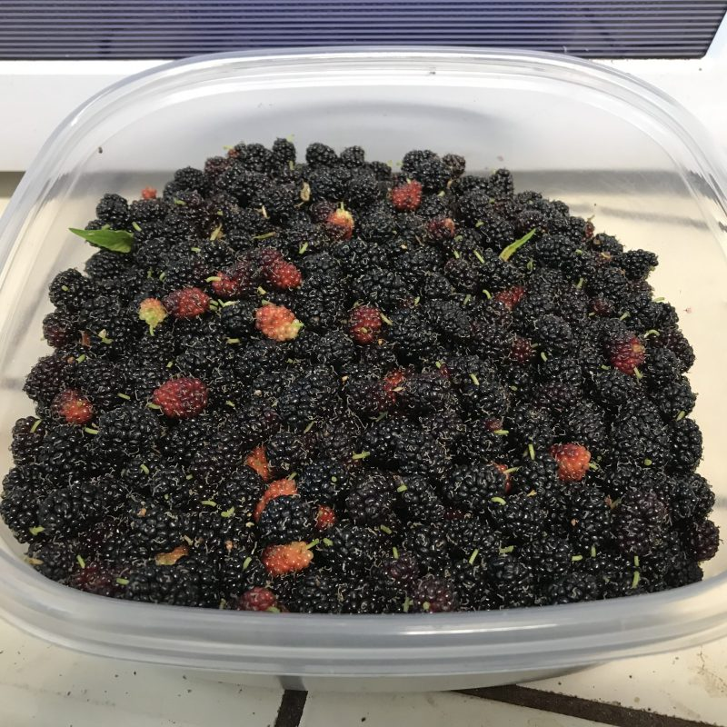box of mulberries