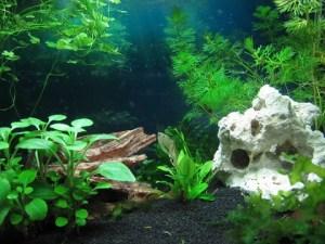 Carina T. - Der letzte Weg mit Fischen (Aquarium)