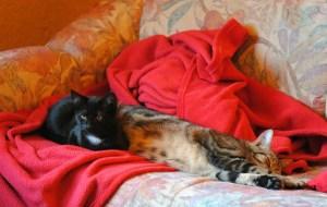 Linda W. - Harmonie im Mehrkatzenhaushalt (2)