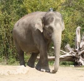 Christina H. - Elefant