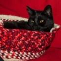 Häkelhöhle für Katzen