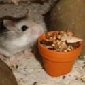 Körnertöpfchen für Nager