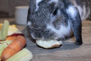 Anna B - Märchen der Kaninchenhaltung (2)