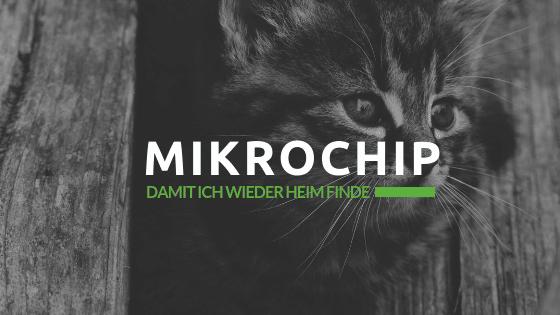 Mikrochip für Hunde und Katzen