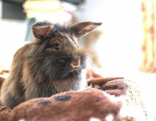 Kaninchen sitzt auf einem Handtuch