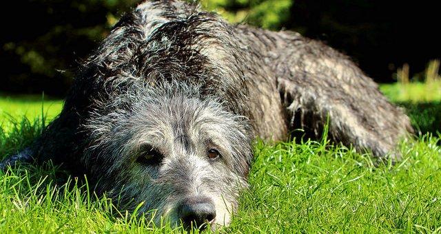 Hundebett XXL für große Hunderassen