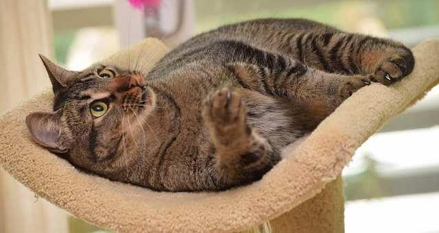 Bakterielle Meningitis und andere Infektionen des Nervensystems bei Katzen