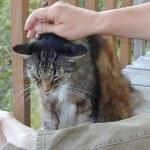 Der Katzenfloh lauert überall