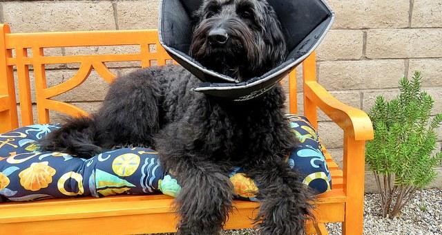 Erste Hilfe für Haustiere – Grundlegende Verfahren