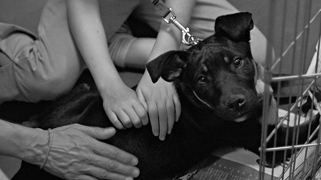 Nicht alle Knoten, Wucherungen und Zysten bei Hunden sind gutartig