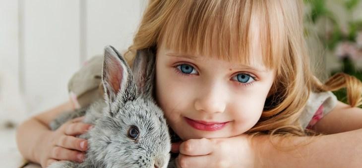 Zerstörerisches Verhalten bei Kaninchen