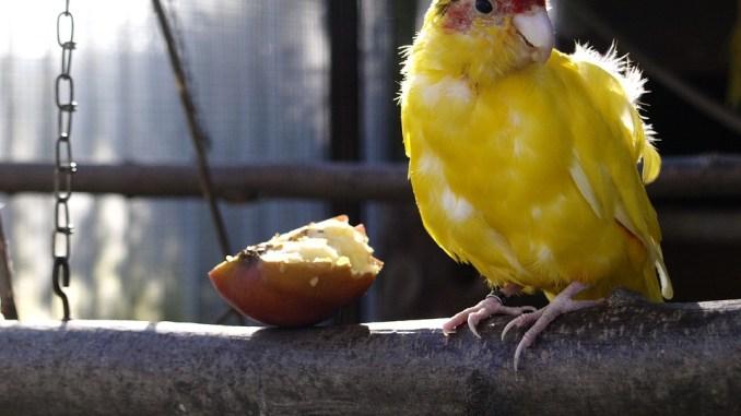 Vogelzucht