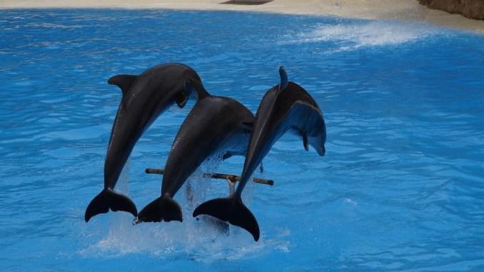 delfine-in-gefangenschaft