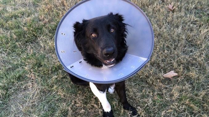 hund-verletzt-haustierversicherung