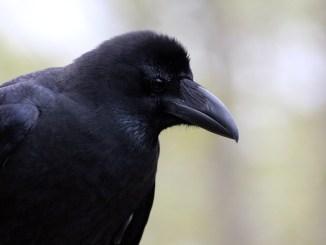 schwarzer-punkt-beim-vogel