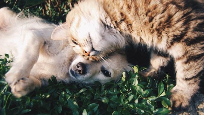 tiere-hund-katze