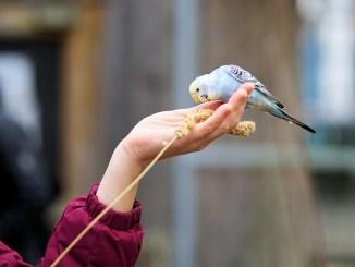 vogelarten