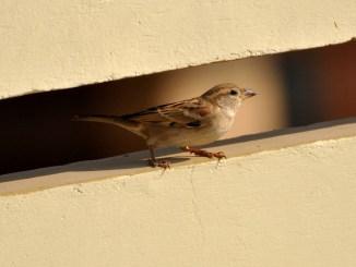 vogelhaltung