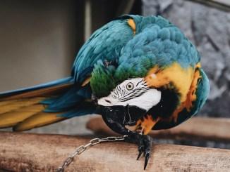 vogelzubehoer