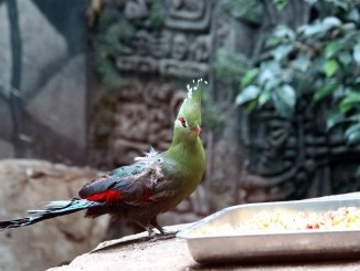 zoo-vogel