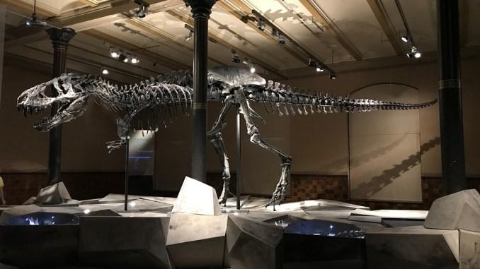 t-rex-skelett