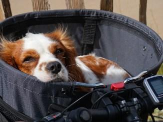 hunde-fahrradkorb