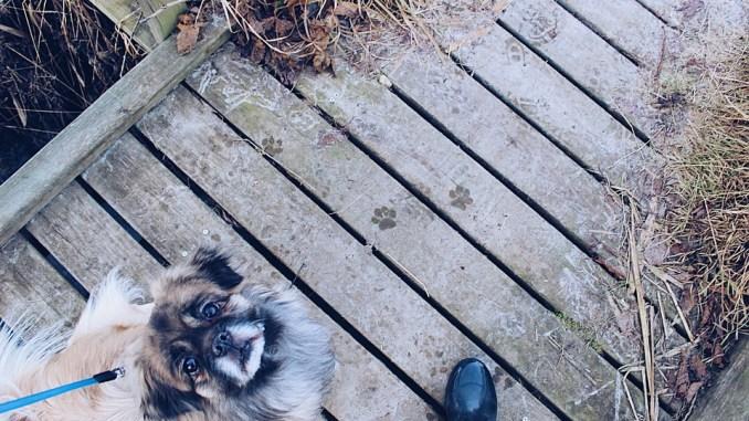 leinenzwang-erfurt-hund